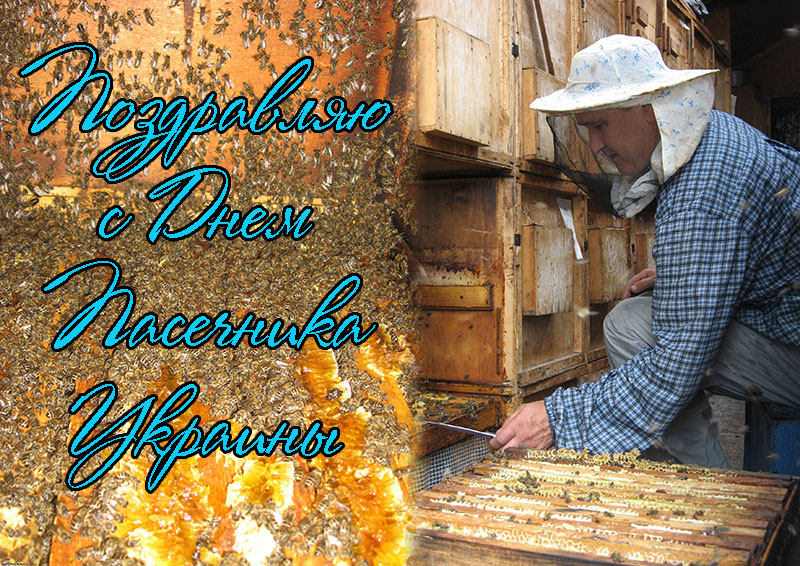 Поздравления с праздником пчеловода 70